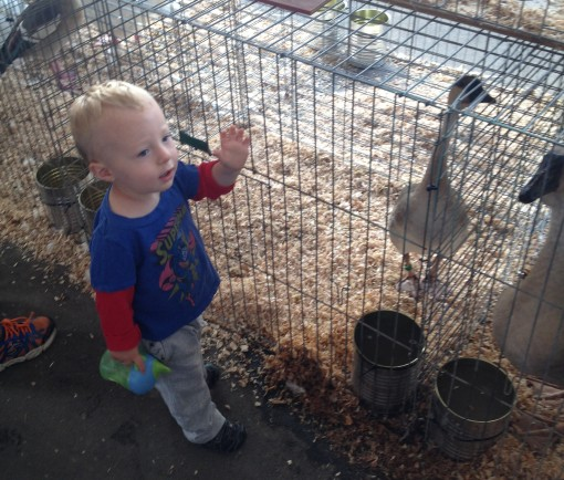 Enjoying the company of geese and chickens and bunnies at the WI state fair.